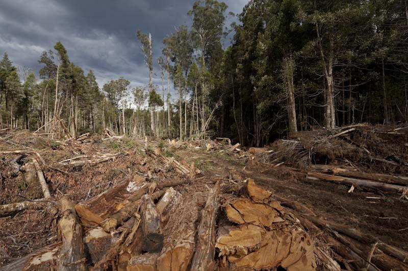 barren land- logging for paper production